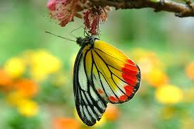 colourful butterfly inspiration photos