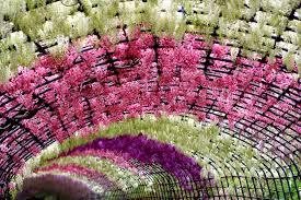 flower wisteria arch flowers walkway flower wallpaper high