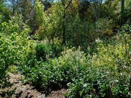 forestgarden5 jpg