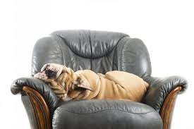 the dog trainer how to keep dogs off furniture dog trainer