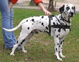 10 dangerous dog breeds