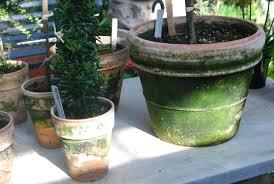 contemporary garden pots dirt simple