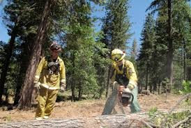 Wildfire Scientific Definition by The Surprising Science Of Wildfires And Tree Killing Beetles