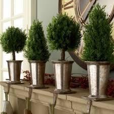 Mantel Topiaries - 190 best boxwoods herbs topiaries images on pinterest