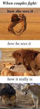 Lion Meme - when couples fight lion meme