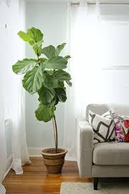 modern tall indoor plants style houseplant google search garden