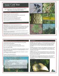 native plants of wisconsin invasive species info u2013 spread the word not the plant