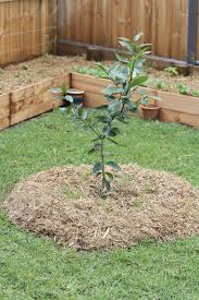 Landscaping Ideas For The Backyard by Fruit Trees In Garden Design U2013 Ideas For Planting Fruit Trees In