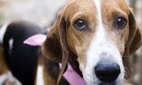 euthanasia cremation animal welfare association of nj