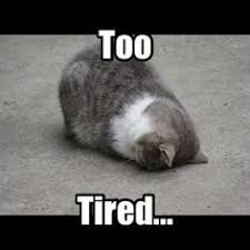 Meme Tired - tired cat memes image memes at relatably com