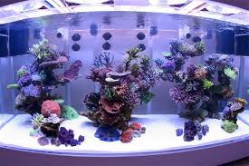 Aquascape Online 28 Best Saltwater Aquascape Images On Pinterest Marine