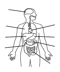 coloring pages human outline human blank outline human body
