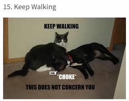 Cats Memes - best 50 funny cat vs dog memes images to prove who s boss