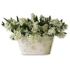 of bethlehem flower christmas flower gift of bethlehem garden orvis