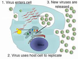 difference between viral u0026 bacterial infections study com