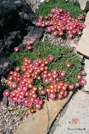 native hedgerow plants 187 best a garden plant list images on pinterest flower