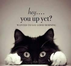 Good Morning Cat Meme - 74 funny happy good morning meme to explode your energy bayart