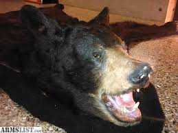 armslist for sale real black bear skin rug 6 u00273
