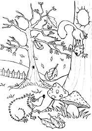 hedgehog talking squirrel colouring pages bulk color