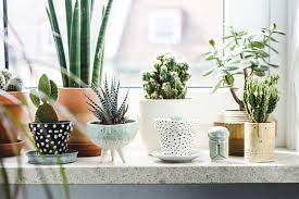 beautiful house plants 20 beautiful indoor plants with desert atmosphere home design and