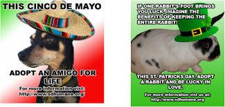 Cinco De Mayo Meme - making memes the matter carlos nava s dp