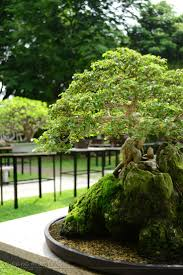 109 best bonsai w ogrodzie images on pinterest bonsai trees