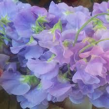Blue Wedding Bouquets Blue Wedding Flowers Bettie Rose Brighton