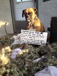 boxer dog vomiting after eating 249 best funny boxers and other dog stuff images on pinterest