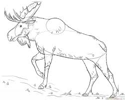 how to draw a moose step by step drawing tutorials