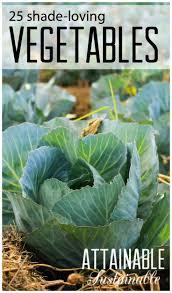 185 best vegetable garden images on pinterest gardening plants