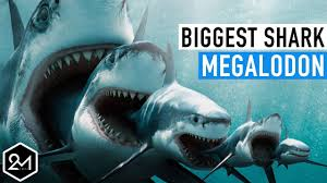biggest megalodon shark top 10 unbelievable facts about the biggest shark ever megalodon