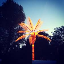 palm tree neon light germans are strange iv efficiency and a traffic light and the