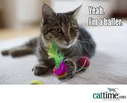 Cat Facts Meme - 31 best cat meme images on pinterest kittens cat facts and cat memes
