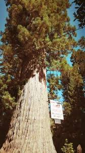 famous tree houses world famous tree house piercy 2018 all you need to know