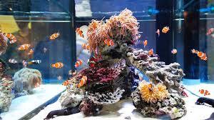 how to clean fish tank sand aquarium care