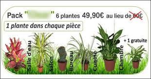 plantes d駱olluantes chambre les plantes dépolluantes arnaques des listes de plantes