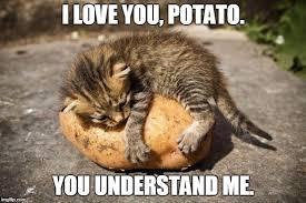 Potatoe Meme - potato cat meme generator imgflip