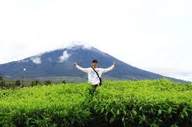 Teh Kayu Aro kebun teh kayu aro kerinci destinasi liburan dengan pesona alam