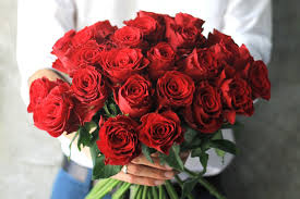 why are roses so popular for s day reader s digest