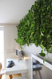 Interior Plant Wall A High Performance Green Wallthe Active Modular Phytoremediation