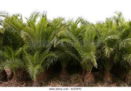 palm trees stock photos palm trees stock images alamy