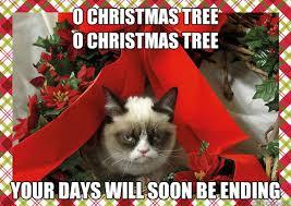 Cat Christmas Tree Meme - o christmas tree o christmas tree your days will soon be ending a