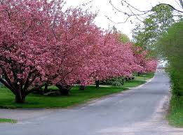 albero giardino alberi ma con criterio il potatore