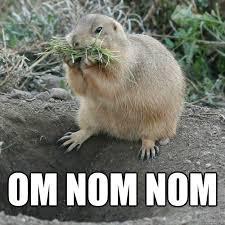 Nom Nom Nom Meme - om nom nom prairie dog nom quickmeme