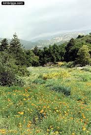 Botanic Garden Santa Barbara Pch 7 Santa Barbara Botanical Gardens Kimbriggs