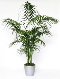 8 Houseplants That Can Survive by 20 Indoor House Plants That Simply Adore Shade