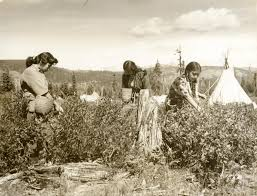 picking huckleberries at yakima ca 1955 native american