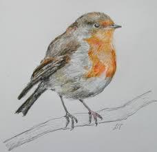 bird watercolours agnesandcora