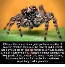 Sad Spider Meme - 25 best memes about kill spider kill spider memes