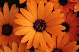Yellow Orange Flowers - spyglass brand marketing blog 2013 11 orange you glad to